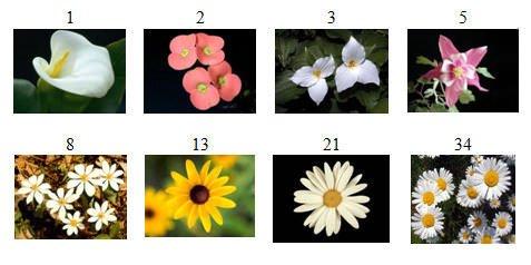 fibonacci numbers in petals of various flowers pixelstrobist